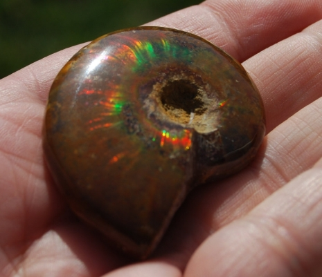 Opalized Ammonite Cabochon Fossil
