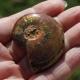 Flashy Opalized Ammonite Cabochon Fossil